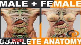دانلود رایگان مدل آناتومی کامل بدن به صورت سه بعدی