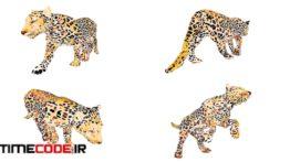 دانلود مدل آماده سه بعدی : حیوانات وحشی  Africa Animal Illustration Animated Part 2