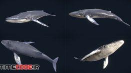 دانلود مدل آماده سه بعدی : حیوانات دریایی Low Poly Fish Collection Animated Pack 4