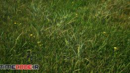 دانلود مدل آماده سه بعدی : گل و گیاه Realistic Foliage Pack – UE4