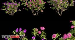دانلود مدل آماده سه بعدی : بوته گل Bougainvillea