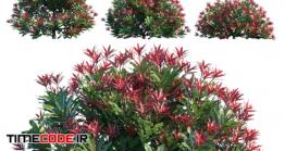 دانلود مدل سه بعدی : گیاه خلنگ ژاپنی Pieris Japonica Forest Flame