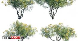 دانلود مدل آماده سه بعدی : درخت Thevetia Peruviana | Cascabela Thevetia