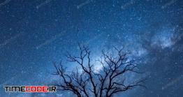 دانلود عکس استوک : ضد نور درخت در آسمان شب Night Sky