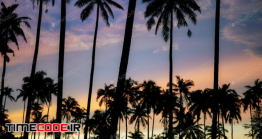 دانلود عکس استوک : ضد نور درختان نخل Palm Tree With Color Sky