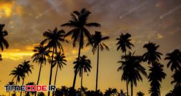 دانلود عکس استوک : ضد نور درختان نخل Palm Tree With Golden Sky