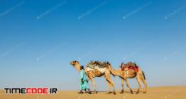 دانلود عکس شتر با ساربان در کویر  Cameleer With Camels In Rajasthan