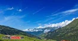 دانلود عکس گاو ها در کوه  Cows Grazing In Himalayas