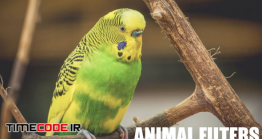 دانلود 17 پریست لایت روم عکاسی حیات وحش Animal Photography Lightroom Presets