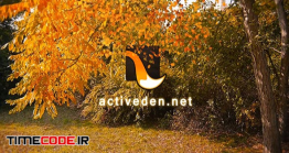 دانلود پروژه آماده افتر افکت : لوگو موشن پائیزی Autumn Logo