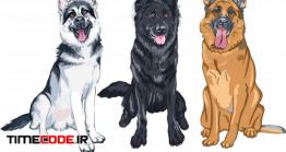 دانلود وکتور سگ ژرمن شپرد Illustration Set Of Shepherd Dogs