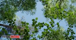 دانلود فوتیج درختان سر سبز در جنگل The Spring Forest