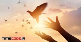 دانلود عکس ضد نور آزاد کردن کبوتر Woman Praying And Free Bird